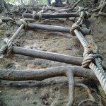 Vertical rope ladders x 6+