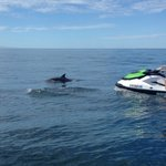 Dolphin sightings are a daily occurrence at SoCal Jet Skis!