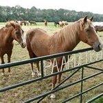 De Paardenkamp - Boerderij Vosseveld