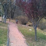 Walking paths near cabins and creek