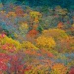 紅葉(十和田湖周辺)