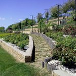 Balkan Botanic Garden of Kroussia