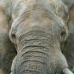 Wonderful viewing of elephants