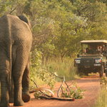 Traffic jam Makweti style