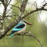 Migratory birds return to the reserve in summer