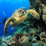 gwadaloisirs plongée GLP diving