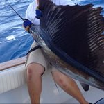Our sailfish!