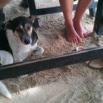 Ontbijt met je voeten in het zand en.. een zwerfhondje!