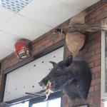 Boars head by door