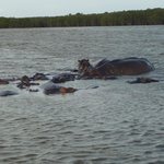 Close to the hippos