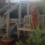 Sunny's garden bench