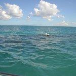 Photo de Blue Lagoon Excursion