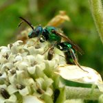 Insects provide opportunities for macro photography.