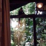 Monkeys on our balcony!