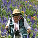 Full emersion wildflower viewing near Carson Pass