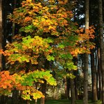 Dorena Lake Fall Colors:  November 2013