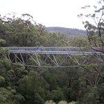 Valley of the Giants' Tree Top Walk