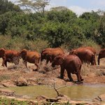 At the nearby elephant orphanage