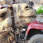 Camel Skills
