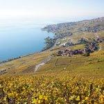 Lavaux-Epsses-Cully: une balade entre vigne et lac