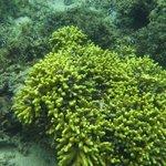 Underwater marine at Bedarra