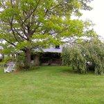 That grand Oak tree again