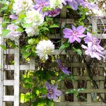 Prettiness on the arbour