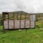 A batter sheep shelter
