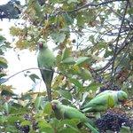 Amazing free parrots