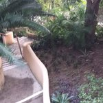 Jungle Path to all rooms, pool, dining and bars