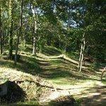 bos waar je kan vertoeven in de achtertuin