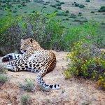A stunning leopard only 5 feet away.