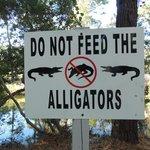 fun to see alligators