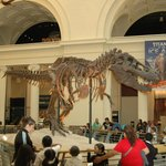 Скелет динозавра на первом этаже музея