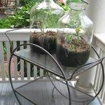Back porch terrariums
