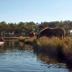 Assateague National Wildlife Refuge