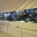 Lovely aquarium in lobby of hotel