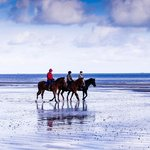 Horses on beach, riding through surf