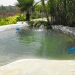 Pool with nature