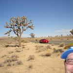 Joshua Tree National National Park