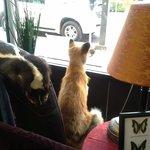 Fox in the window