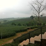 ChouiFong Tea view