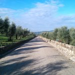 road to the property with olive trees