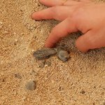 Newly hatched baby turtles