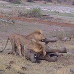 ELEPHANT KILL