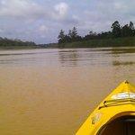 Kayaking along Kinabatangan river