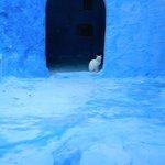 au détour d'une ruelle ciel d'azur, un chat blanc m'attendait...