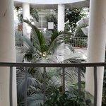 Растения тропических зон
