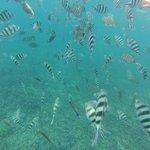 Journée Snorkeling