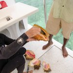 Snorkeling with a Chef - Pulling out the conch